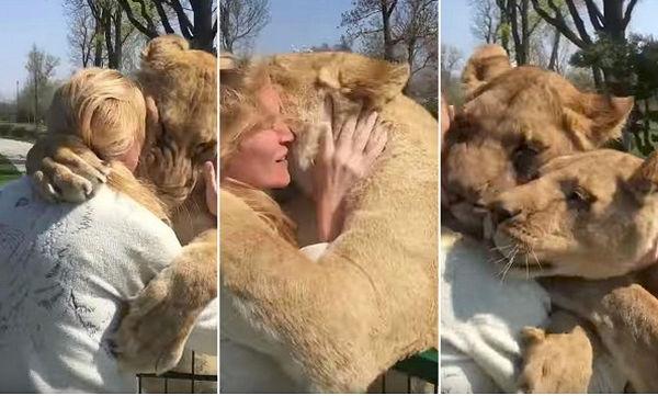 Γυναίκα συναντά τα λιοντάρια που μεγάλωσε, μετά από 7 χρόνια – Η απίστευτη αντίδραση τους