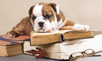 Πώς τα σκυλιά βοηθούν το παιδί να μάθει να διαβάζει