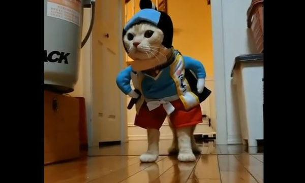 Δείτε για ποιο λόγο αυτή η γάτα τρέλανε το διαδίκτυο (vid)