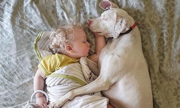 Κακοποιημένος σκύλος φωτογραφίζεται αγκαλιά με τον μόλις 23μηνών νέο του ιδιοκτήτη ( pics + vid)