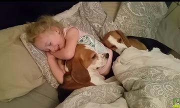 Πόσο τρυφερό: Το κοριτσάκι και τα σκυλάκια της δεν θέλουν να σηκωθούν από το κρεβάτι (vds)