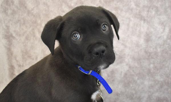 Το πρώτο σκυλάκι που εγκαταλείφθηκε το 2018, έχει ραγίσει τις καρδιές όλων (vid)