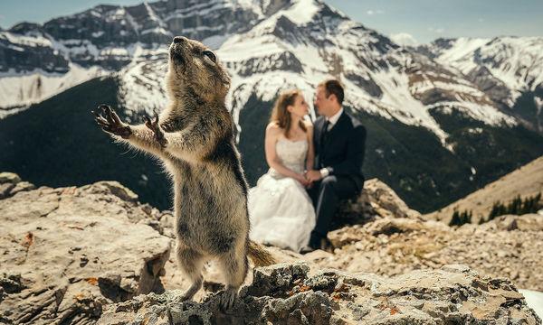 Υπέροχες γαμήλιες φωτογραφίες, με αξιολάτρευτα ζωάκια να «κλέβουν» τις εντυπώσεις (pics)