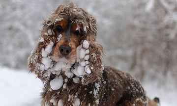 Ζωάκια αντικρίζουν χιόνι για πρώτη φορά και οι αντιδράσεις τους είναι τόσο αστείες (pics)