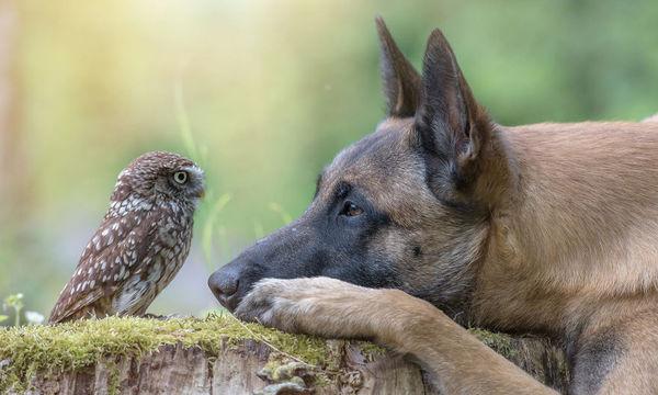 Μία παράξενη φιλία: Σκύλος και κουκουβάγια είναι αχώριστοι! (pics)
