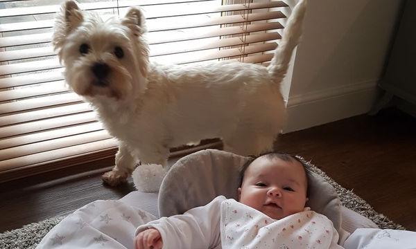 Ζευγάρι απέκτησε κοριτσάκι: Δείτε τι έφτιαξαν στον σκύλο τους για να μην ζηλεύει (pics)