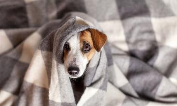 Πώς θα προστατεύσετε το σκύλο σας από τον επικίνδυνο ιό της γρίπης