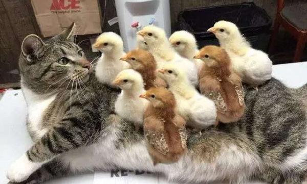 Οι πιο παράξενες φιλίες ζώων, που έχουν «σκλαβώσει» το διαδίκτυο (pics)