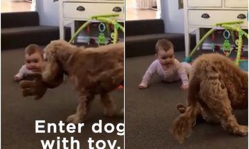 Απίθανο βίντεο: Σκυλίτσα βρήκε τον τρόπο να ηρεμήσει το μωρό που έκλαιγε
