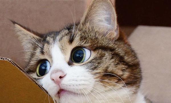 Ο γάτος που έχει ξετρελάνει το διαδίκτυο με τις απίστευτες εκφράσεις του (pics)
