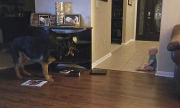 Τέλειο! Μωρό και σκύλος παίζουν κρυφτό και χαρίζουν άφθονο γέλιο (vid)