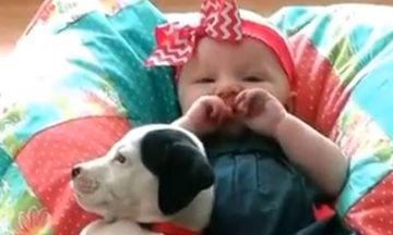 Ένας χρόνος μαζί: Παιδί και σκύλος σε μοναδικές στιγμές ευτυχίας (video)