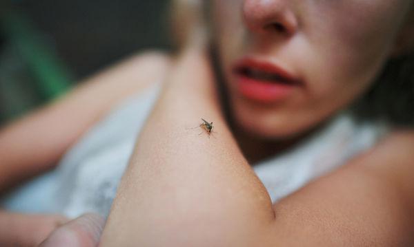 Καταραμένα κουνούπια, θα σας εξολοθρεύσω!