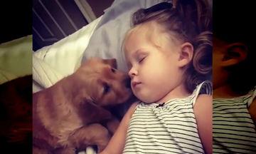 Τόσο τρυφερό! Κουτάβι προσπαθεί να ξυπνήσει το κοριτσάκι που κοιμάται βαριά (video)