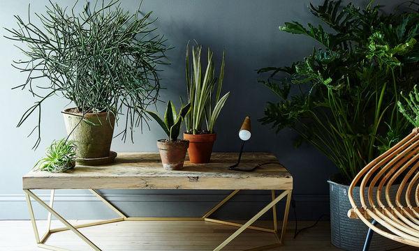 Δείτε ποια φυτά μπορείτε να «μεγαλώσετε» μέσα στο σπίτι σας για να το διακοσμήσετε (vid)