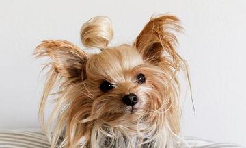 Aυτο το σκυλάκι θα μπορούσε να είναι η καλύτερη fashion blogger (pics)
