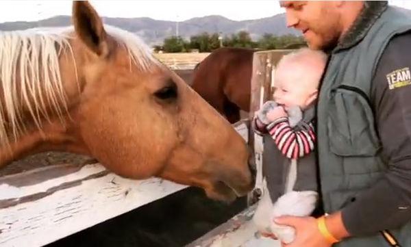 Θα λιώσετε! Δείτε πως αντιδρά ένας μπόμπιρας όταν το άλογο τον ακουμπά με τη μύτη του (vid)