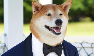 Αυτός είναι ο πιο μοδάτος σκύλος που έχετε δει (pics)