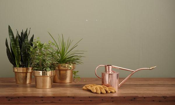 Πέντε φυτά για το φοιτητικό σου σπίτι που δεν χρειάζονται πολύ πότισμα