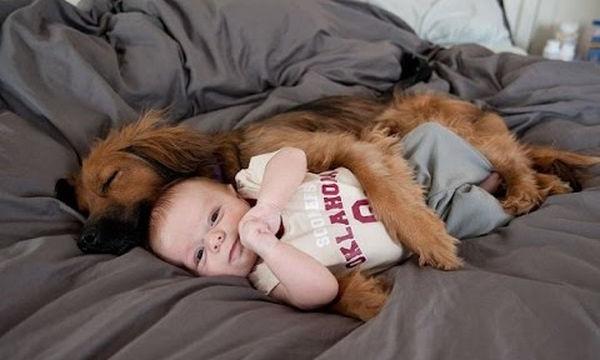 Μωρά απολαμβάνουν τη φροντίδα των τετράποδων φίλων τους - Απολαυστικές στιγμές (vid)