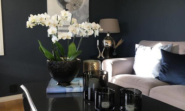 Επιλέξτε το μπλε για τη διακόσμηση του σπιτιού σας - Είκοσι προτάσεις για να πάρετε ιδέες (pics)