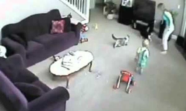 Απίστευτο! Γάτα επιτέθηκε σε μπέιμπι σίτερ για να …προστατεύσει το παιδί (vid)