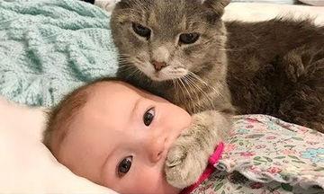 Παιχνίδια, γέλια αλλά και χαριτωμένοι καβγάδες ανάμεσα σε μωρά και τα γατάκια τους (vid)