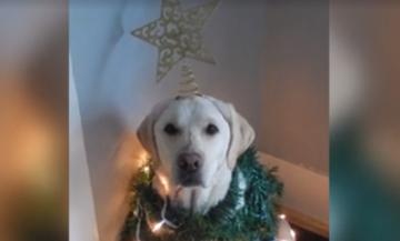 Αντί για δέντρο στόλισε τον σκύλο του!  (vid)