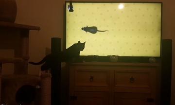 Γατούλα «επιτίθεται» στην τηλεόραση για να πιάσει ποντίκια καρτούν! (vid)