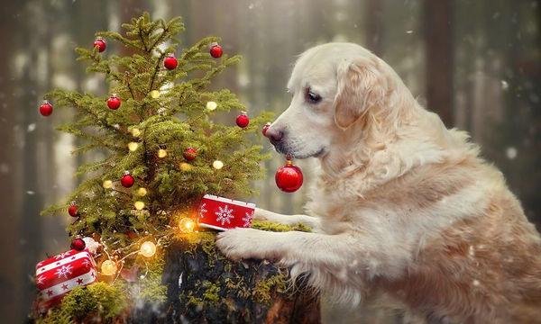 Φωτογραφίζει τον σκύλο του με χριστουγεννιάτικο ντεκόρ και οι φωτογραφίες είναι φανταστικές (pics)