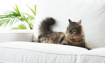 Πώς να αφαιρέσετε τις τρίχες των κατοικίδιων από τον καναπέ σας