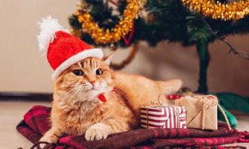 Πώς να κρατήσετε τα ζωάκια σας ασφαλή στις γιορτές
