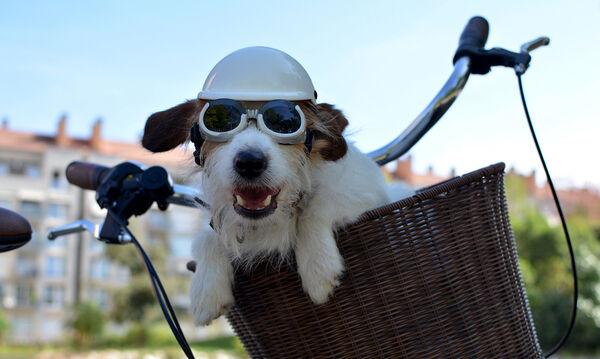 Δείτε πώς πήγε βόλτα τον σκύλο του με το ποδήλατο! (vid)