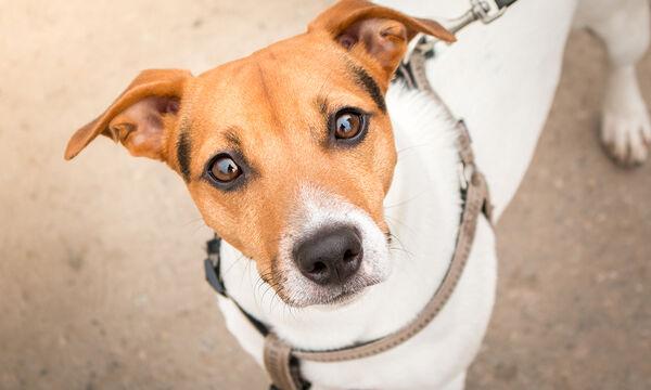 Πονηρό σκυλί το σκάει από το σπίτι με ξεκαρδιστικό τρόπο (vid)