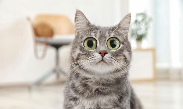 Μα τι φοβήθηκε τόσο πολύ αυτή η γάτα; Δεν θα το πιστέψετε! (vid)