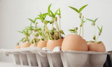 Έξυπνες χρήσεις για να μην ξαναπετάξετε τα τσόφλια των αυγών