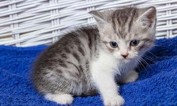 Καταπληκτικό video καταγράφει πώς μεγαλώνει ένα γατάκι βήμα – βήμα (vid)