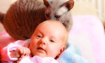 'Εξι μύθοι για τις γάτες και τα μωρά