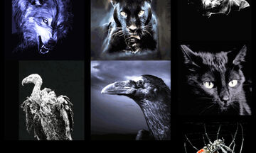 Διάλεξε ένα ζώο και μάθε τι αποκαλύπτει για τη σκοτεινή σου πλευρά
