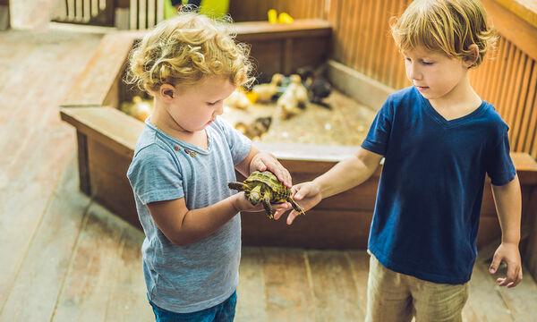 Παιδιά και ερπετά: Ασφάλεια και υγεία στην οικογένεια