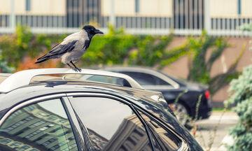 Πώς να καθαρίσετε τις κουτσουλιές από το αυτοκίνητό σας