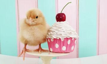 Το πιο χαριτωμένο photoshooting που έχετε δει: κοτοπουλάκια «ποζάρουν» δίπλα σε γλυκά (pics)