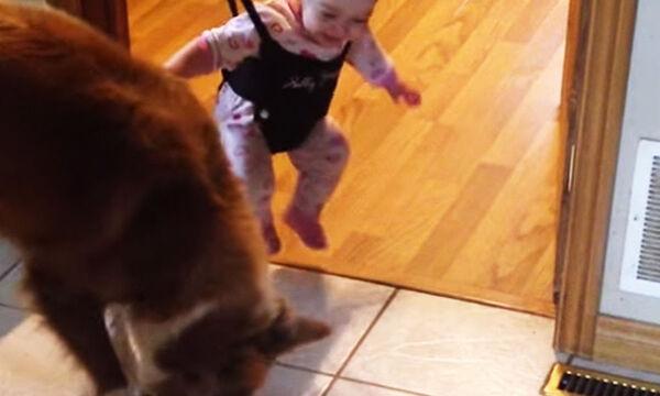 Δείτε τι προσπαθεί αυτός ο σκύλος να μάθει στο μωρό (vid)